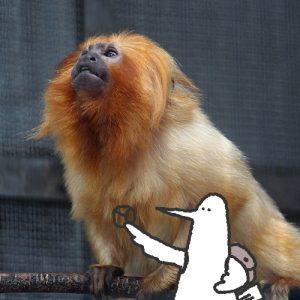 カトリさん、動物たちと戯れるー浜松市動物園への旅