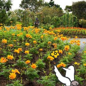 カトリさん、花の庭巡りを満喫ー浜名湖ガーデンパークへの旅