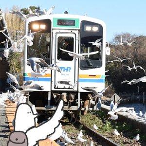カトリさん、カモメと交流するー浜名湖佐久米駅への旅