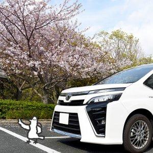 カトリさん、春を感じるー佐鳴湖周辺への旅