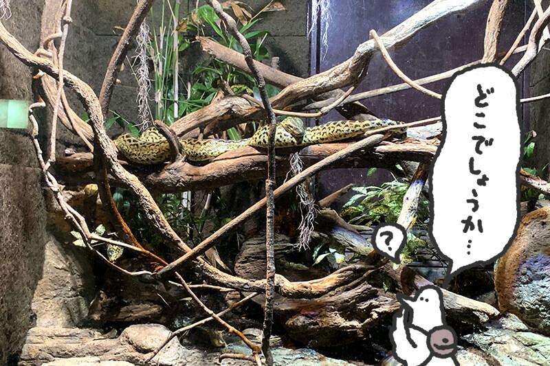 浜松をドライブ!car trip 浜松 伊豆 爬虫類がいる体験型動物園iZooへの旅