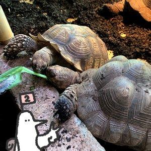 【番外編】カトリさん、ワニを食すー体験型動物園iZooへの旅