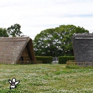カトリさん、歴史に惹かれるー蜆塚遺跡・浜松市博物館への旅