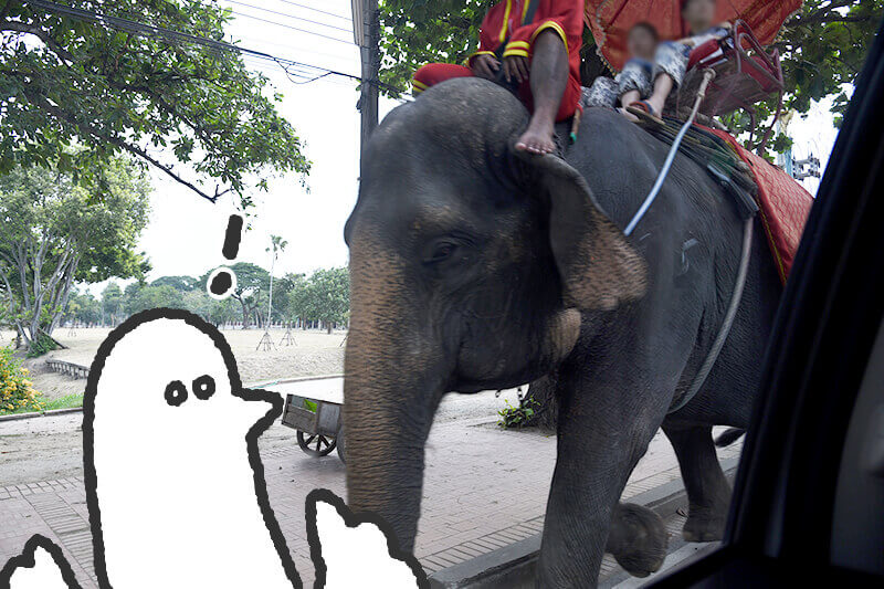 浜松をドライブ!car trip 浜松 タイ アユタヤ ゾウ乗り エレファントビレッジへのドライブ旅