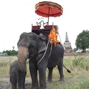 カトリさん、ゾウさんに揺られるー海外旅行 タイへの旅