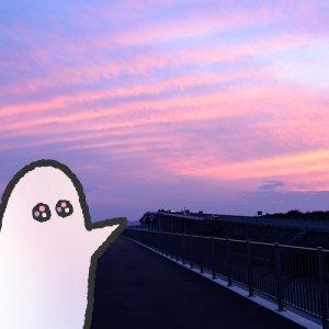 カトリさん、夕焼けとウォーキングー遠州灘防潮堤への旅